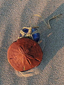 Gourmet Chocolate Sand Dollar